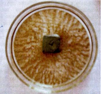 Пример воздействия ЭМ-бетонного кубика