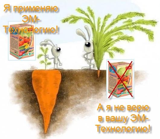 ЭМ-технология при выращивании моркови