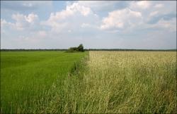 Об органической системе земледелия