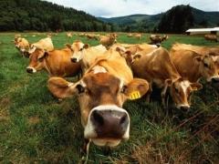 Клинико-лабораторные аспекты применения препарата «Байкал ЭМ-1» в животноводстве