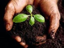 Как вырастить чернозем из обычной почвы