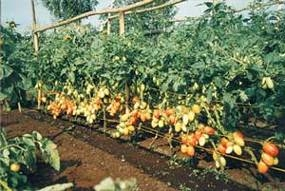 Как увеличить урожай на одном и том же участке