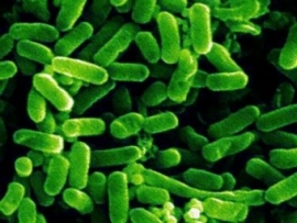 Влияние продукции серии «Курунговит» на качество жизни при синдроме раздраженного кишечника