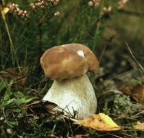 ЭМ в грибоводстве