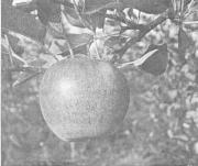 ЭМ-технология — основа сельского хозяйства XXI века