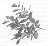 Растения-защитники садовых, овощных культур и цветов