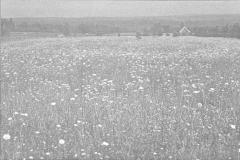 Плодородие почв и микроорганизмы