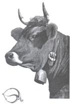 Применение ЭМ-препаратов при выращивании крупного рогатого скота