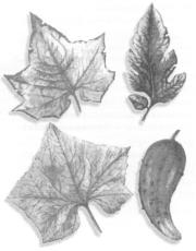 Питание растений и микроорганизмы почвы