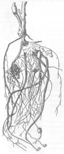 Результаты применения ЭМ-технологии при выращивании гороха