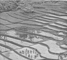 Сеть естественного земледелия в странах Азиатско-Тихоокеанского региона. Вклад Японии