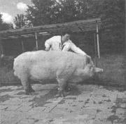 Эффективность применения препарата «Байкал ЭМ-1-У» в животноводстве