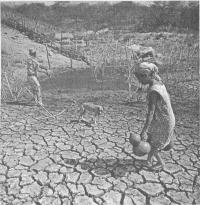 Водный режим почвы и микроорганизмы