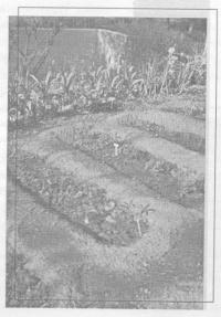 Воздушный режим почвы и развитие микроорганизмов
