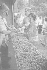 Изучение спроса на овощи, выращенные методами естественного сельского хозяйства, в Германии