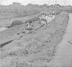 Сеть естественного земледелия