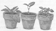 Предварительные результаты испытания препарата «Байкал ЭМ-1» на декоративных древесных и цветочных культурах