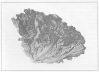 Влияние препарата «Байкал ЭМ-1» на интенсивность роста и развития овощных культур