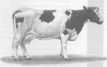 ЭМ-технологии в животноводстве