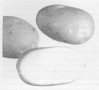 ЭМ-технология и картофель