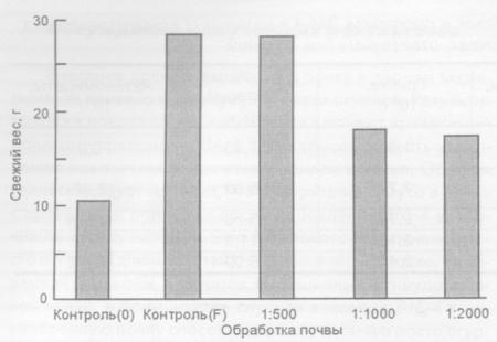 Воздействие лактобактерий на зеленую массу урожая горчицы