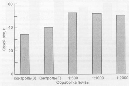 Воздействие лактобактерий на зеленую массу редиса