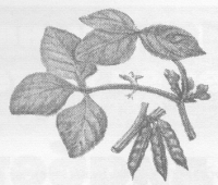История и свойства сои
