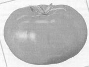 Выращивание помидоров с помощью ЭМ-технологии