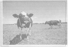 ЭМ-препараты в животноводстве