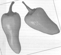 ЭМ-технология при выращивании баклажанов и перца