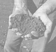 Микроорганизмы и нитратное загрязнение продукции
