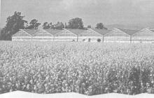 Переход к естественному сельскому хозяйству Кюссей в Калифорнии