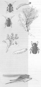Ядохимикаты и микроорганизмы