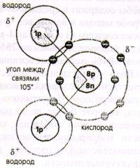 На рис. молекула воды в которой один атом кислорода ковалентно связан с двумя атомами водорода. Молекула полярна