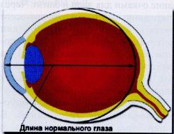 Длина нормального глаза
