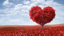 Литовиты: помощь при заболеваниях сердца