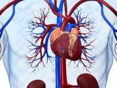 Оптимизация профилактики и лечения заболеваний сердечно-сосудистой системы Литовитами
