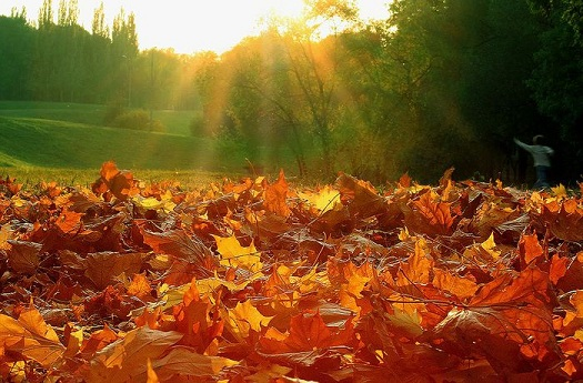 Чудесная осень с НовоПротеином!