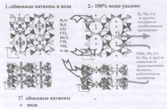 рис. 2. Ионный обмен катионов цеолита на другие катионы, находящиеся в контактируемой среде