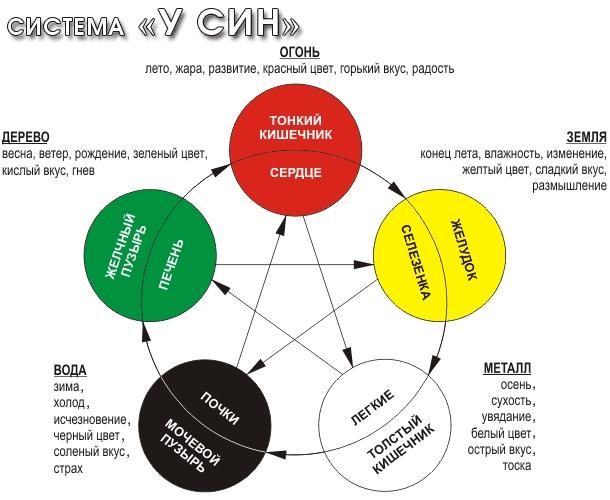 Функциональные орган - органные связи между органами