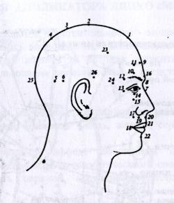 Точки и зоны приложения мячика игольчатого в области головы при различных заболеваниях и состояниях