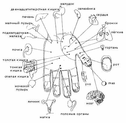 Мячик игольчатый Ляпко и Су-джок терапия