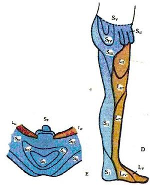 Зона внутренней поверхности бёдер и промежность