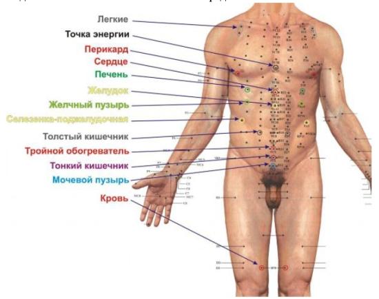 активные точки тела на