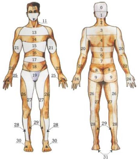 зоны Захарьина-Геда или зоны иррадиации висцеральной боли