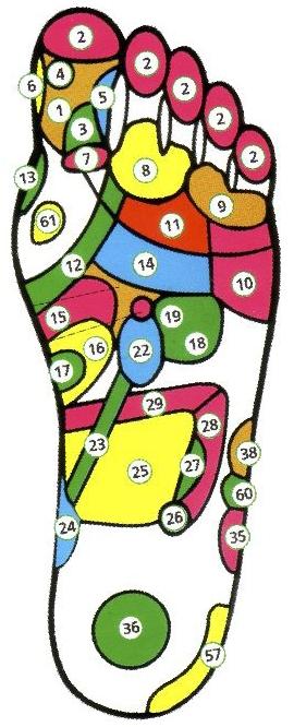 Проекция внутренних органов на стопы. Левая