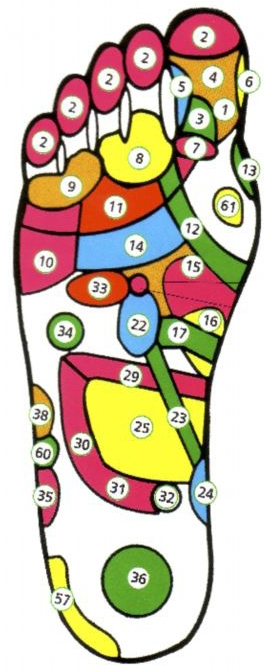 Проекция внутренних органов на стопы. Правая