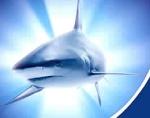 Крема с акульим маслом