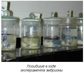 Погибшие в ходе эксперимента эмбрионы