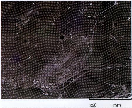 Вид пленки хитозанового геля